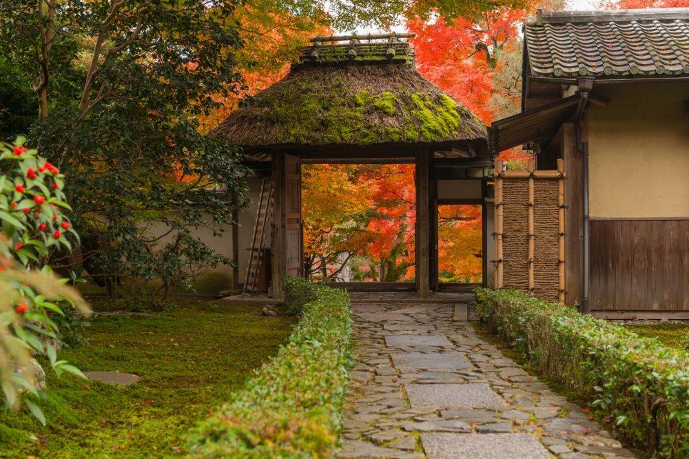Меня всегда привлекают листья клёна и эти ворота с соломенной крышей