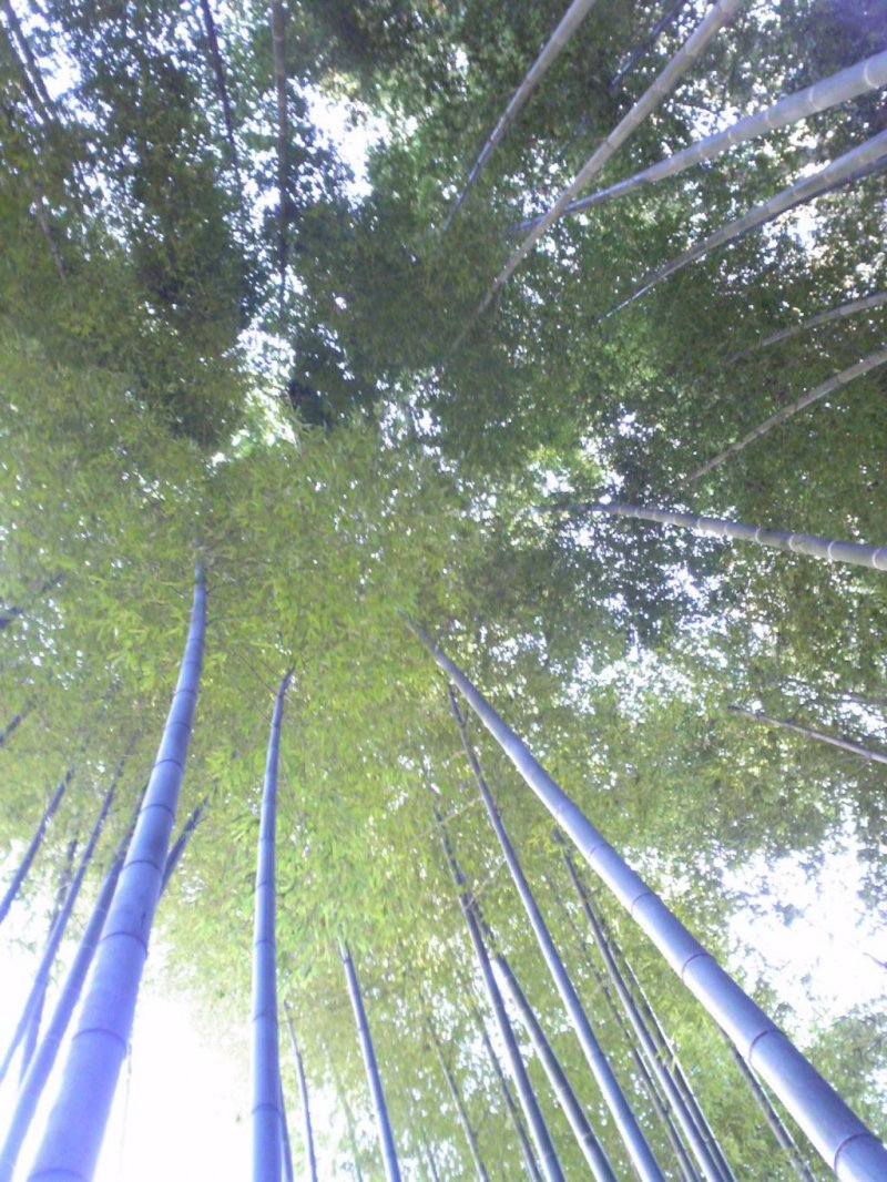 In addition, I recommend visiting the temple's Bamboo grove. I was sitting in the grove, breathing deeply and looking up at the sky between the trees. I felt that a purifying of my mind and body was complete.