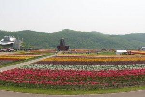 The Kamiyubetsu Tulip Park
