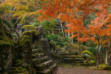 Каменные ступени перед ходзё заросли мхом, как будто бы никто не использовал их долгое время...