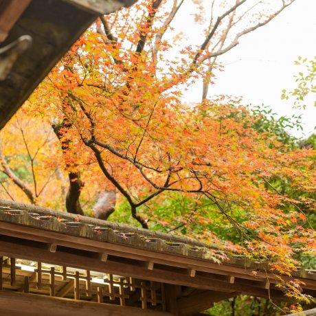 京都八瀬、瑠璃光院はやすらぎの郷