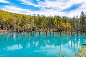 Hokkaido: Top 10 Things to Do