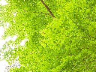 翠の世界が広がる