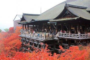 Kiyomizu burns bright in autumn