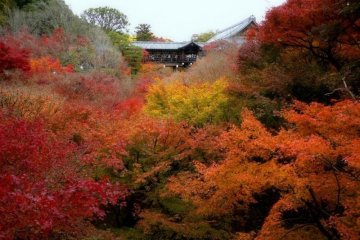 Tofuku-ji floats above a sea of crimson