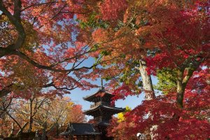 Shinnyo-do's pagoda makes a great silhouette against the foliage