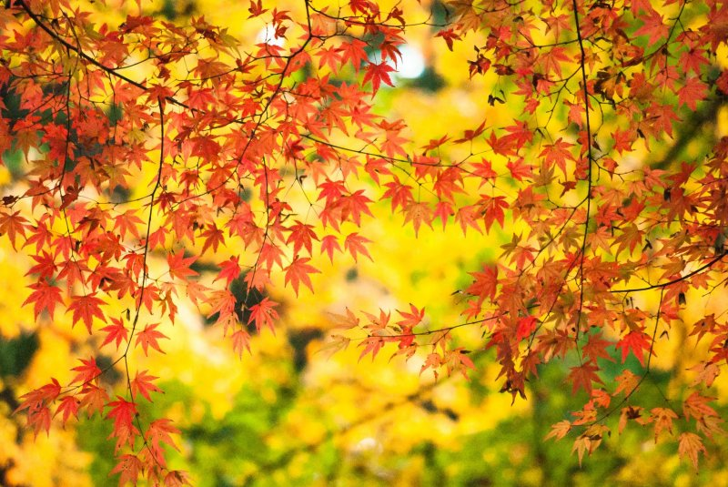 Autumn in Kyoto is a special time