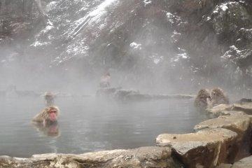The snow monkeys in Nagano