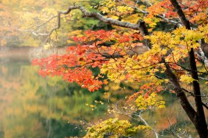 Autumn Foliage 2020
