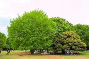 Hikarigoaka Park