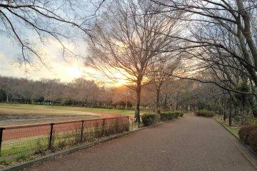 Oizumi Chuo Park (light adjusted)