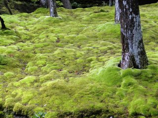 A view of the famed moss at Saihoji