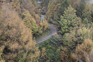 The breath-taking aerial view of the forest from almost 300m high