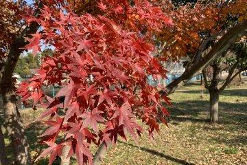 Rokusen Park