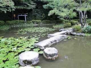 A path through the water