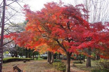 Senkawa Park