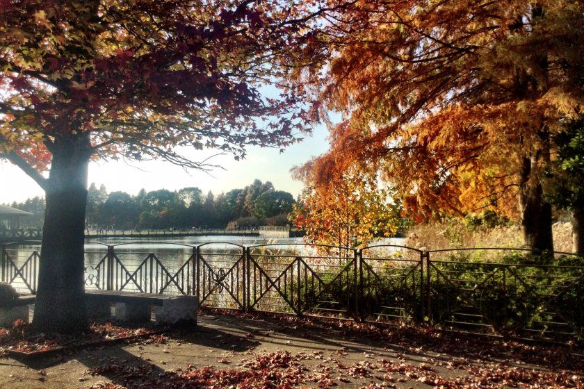 Autumn atmosphere overlooking the lake