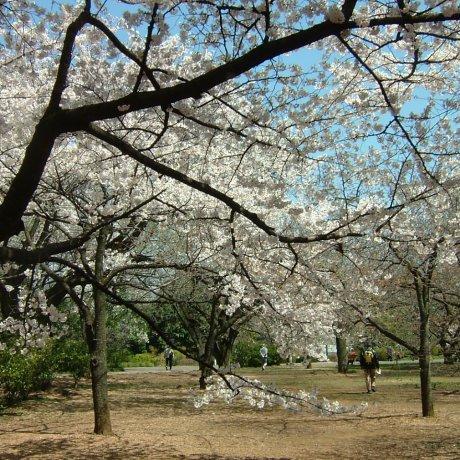 Inagi City - Parks & Gardens
