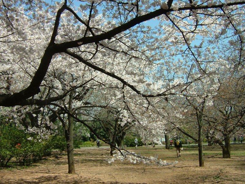 Inagi City Central Park
