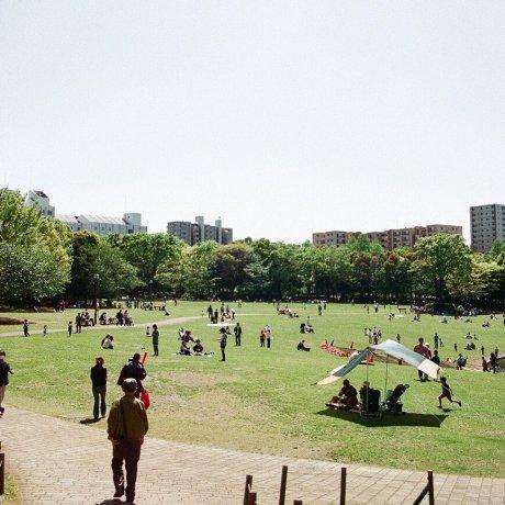 Tama City - Parks & Gardens