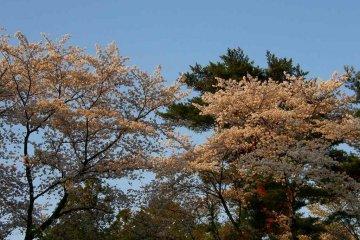 Tamakyuryo Natural Park
