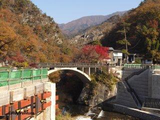 The momiji by the Nagatoro-bashi, the entrance to the gorge