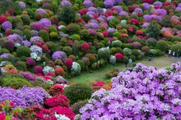 Ome City - Parks & Gardens