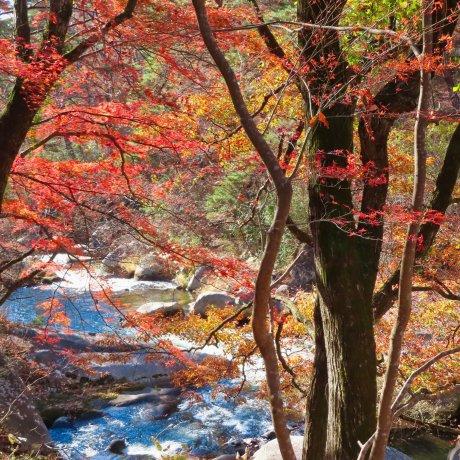 Shosenkyo Gorge Chichibu Tama Kai National Park