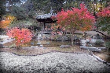 Autumn in Yokohama's Mitsuike Park