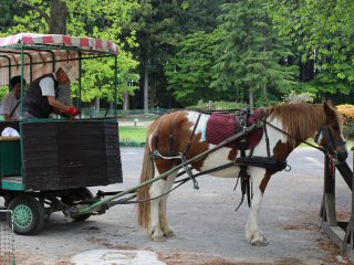 There are also activities with animals, such as a horse and cart ride.