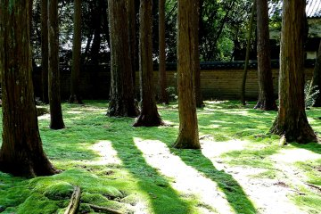 Moss covered garden at the graveyard of Ganjin