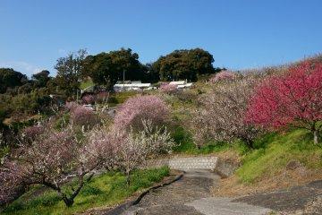 Ushio Bairin Plum Festival