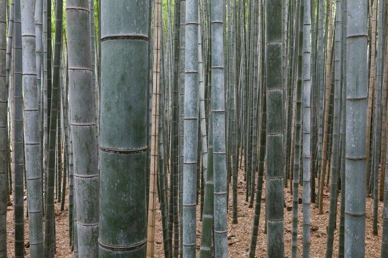 In many ways, bamboo symbolizes the Japanese aesthetic