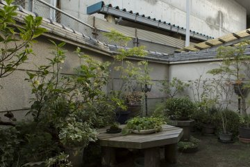 Most buildings in Japan have a beautiful little viewing garden, which is something I always look forward to