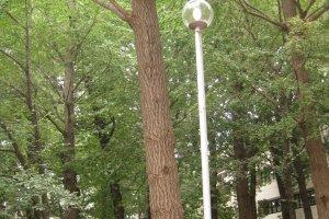 校园内的树木