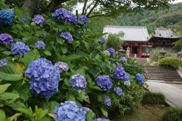 Hydrangea Season at Yatadera Temple