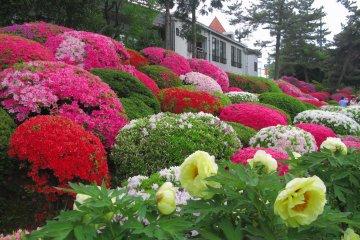 Yakyū Inari Shrine Spring Flower Festival