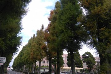 University tree lined walks