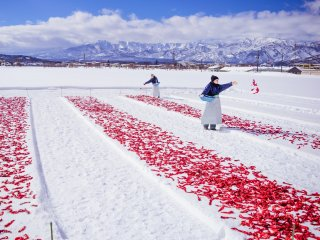 Ladies spreading the chillies out on the snow
