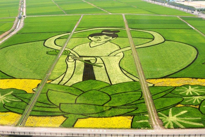 2013's rice paddy art