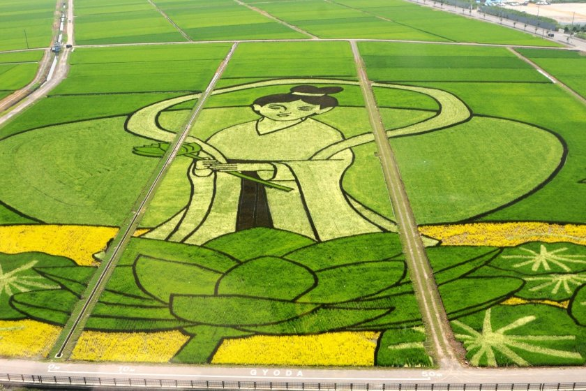 2013\'s rice paddy art