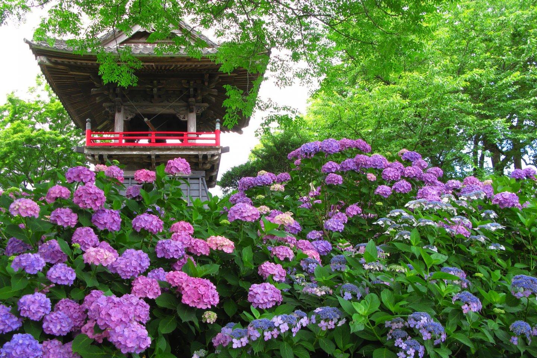 Spectacular color at Saitama\'s Nogoji Temple