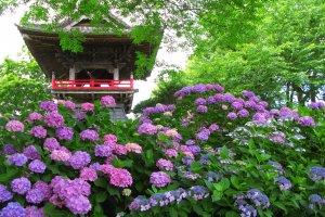 Spectacular color at Saitama's Nogoji Temple
