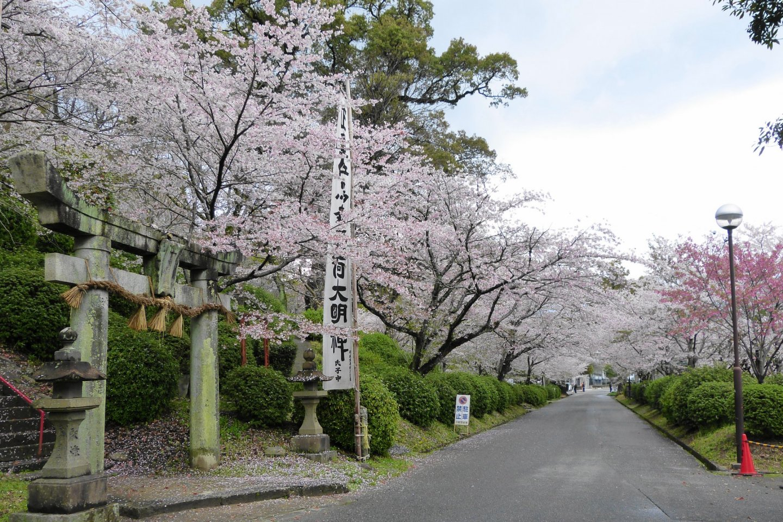 One of Japan\'s top sakura viewing spots - with good reason!