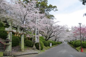 One of Japan's top sakura viewing spots - with good reason!