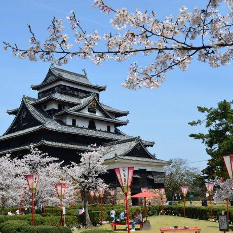 Sakura Season at Matsue Castle Park