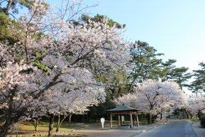 Kotohiki Park, Kagawa