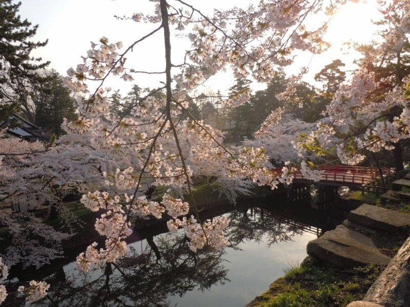 Hirosaki Castle Park, Aomori
