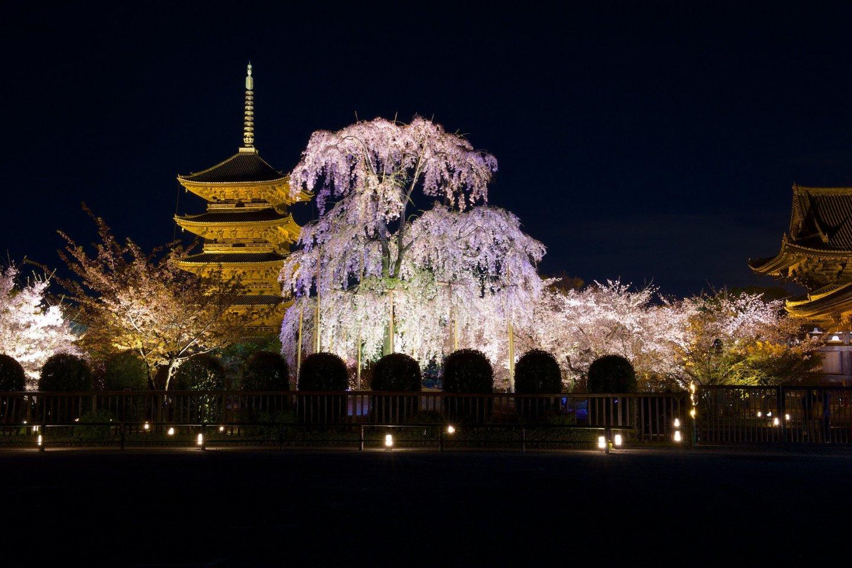 Toji Temple by night