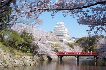 5 of Kansai's Top Cherry Blossom Spots